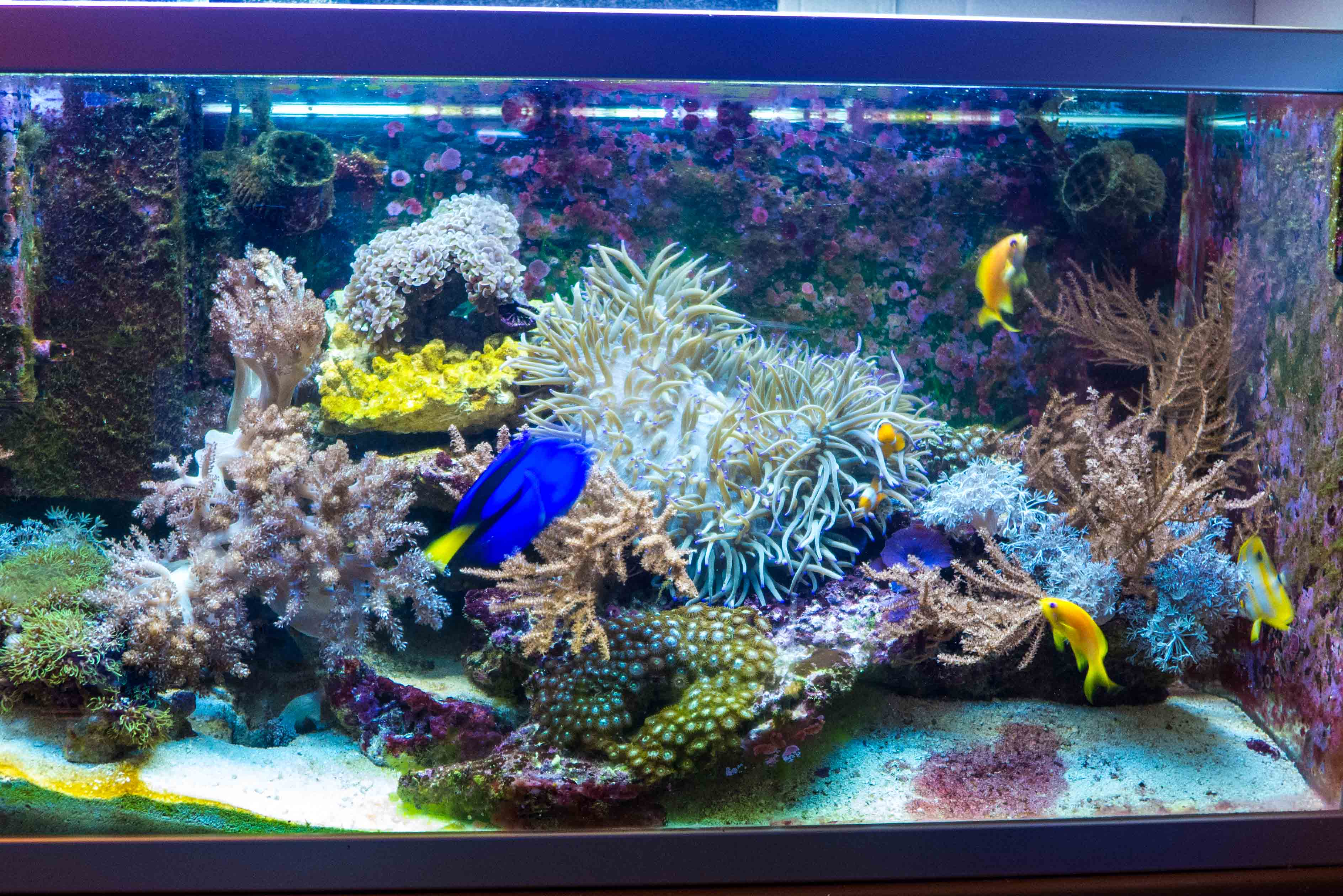 aquarium tagebuch meerwasser hobby. Black Bedroom Furniture Sets. Home Design Ideas